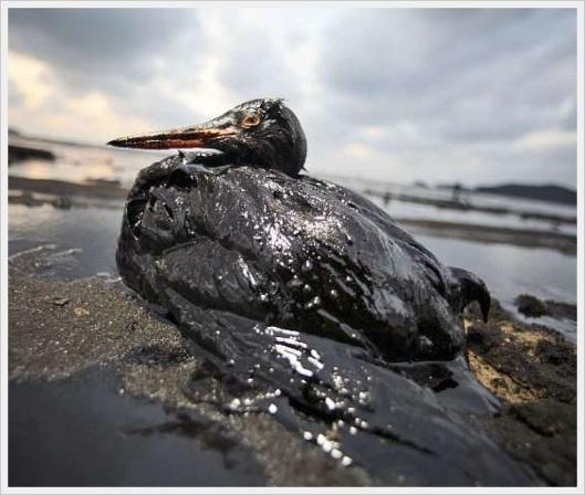 danos ambientais
