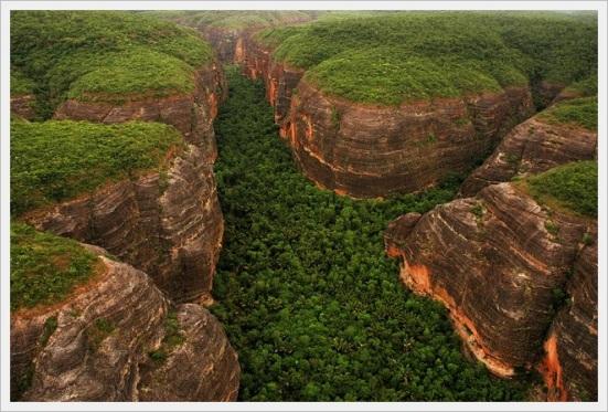vegetação nativa codigo florestal