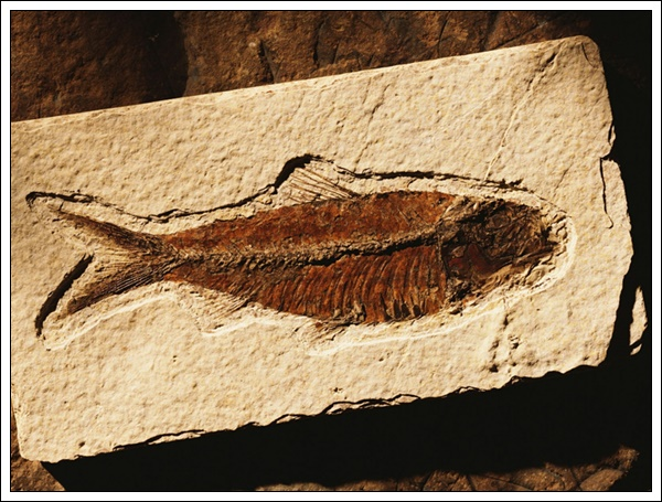 1440_fossil_fish_wallpapers