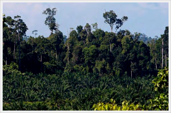 plantacoes-de-palmeiras-de-oleo-adjacentes-a-floresta-tropical-em-sabah-malasia-foto